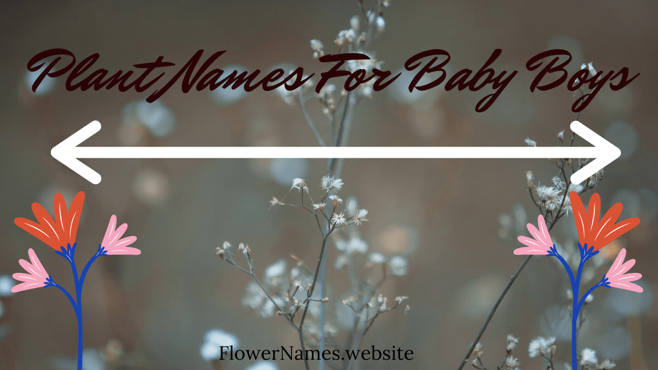 Plant Names For Baby Boy