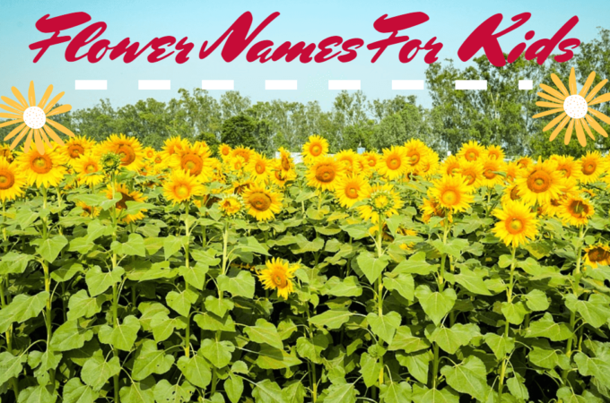 Flower Names For Kids – Cool Flower Names for your Kids {2020}