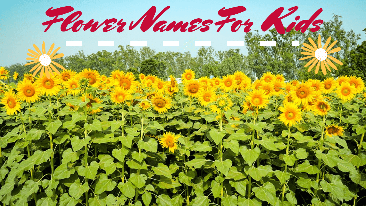 Flower Names For Kids - Cool Flower Names for your Kids