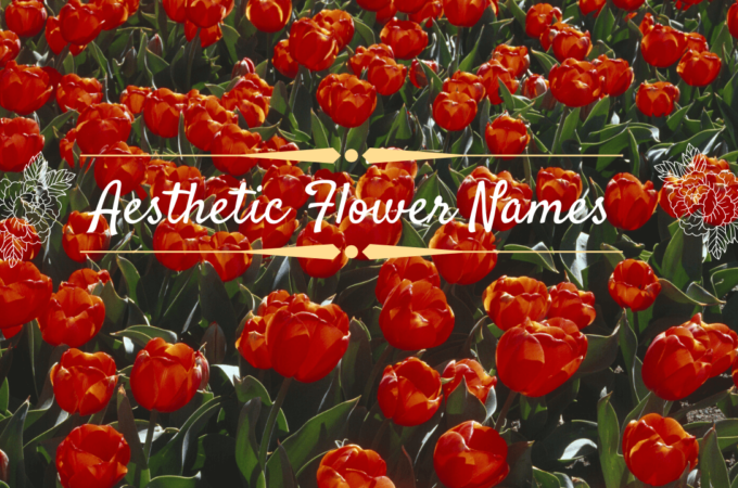 Aesthetic Flower Names - Gigantic List Of Aesthetic Flower Names