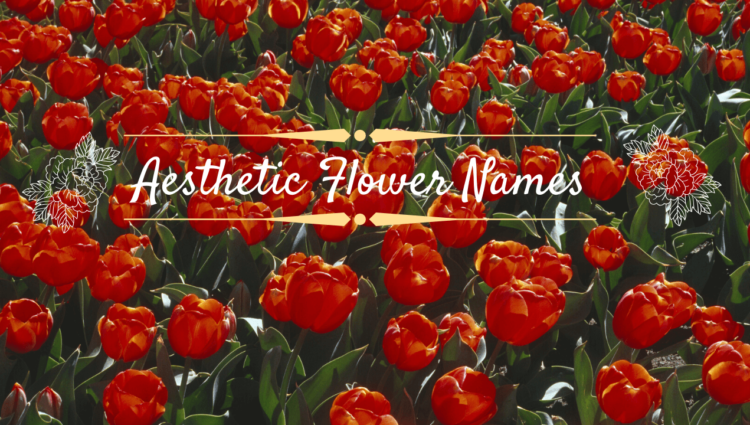 Aesthetic Flower Names – Gigantic List Of Aesthetic Flower Names